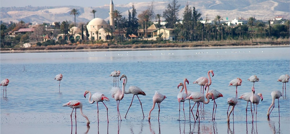 Larnaca weather November